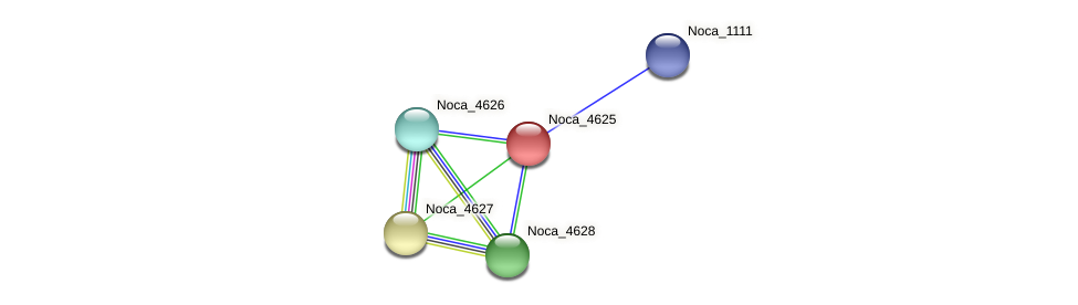 Noca_4625 protein (Nocardioides sp. JS614) - STRING interaction network