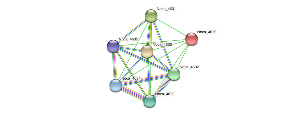 Noca_4629 protein (Nocardioides sp. JS614) - STRING interaction network