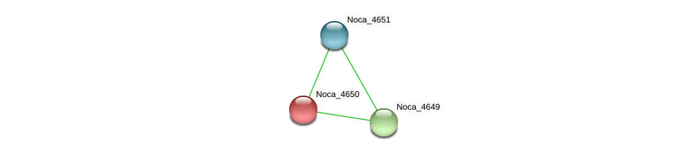 Noca_4650 protein (Nocardioides sp. JS614) - STRING interaction network