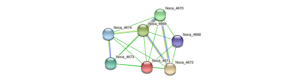 Noca_4671 protein (Nocardioides sp. JS614) - STRING interaction network