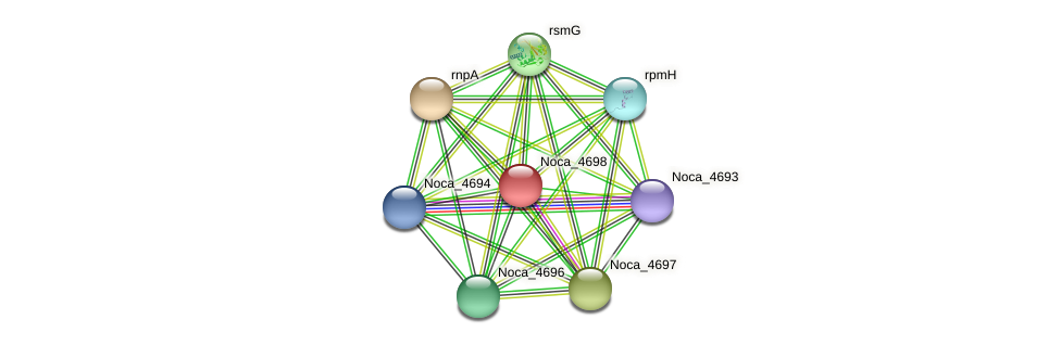 Noca_4698 protein (Nocardioides sp. JS614) - STRING interaction network
