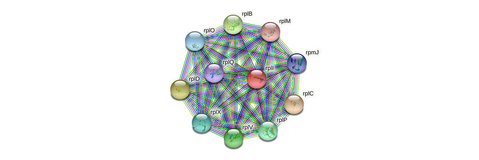 rpl9 protein (Thermosynechococcus elongatus) - STRING interaction network