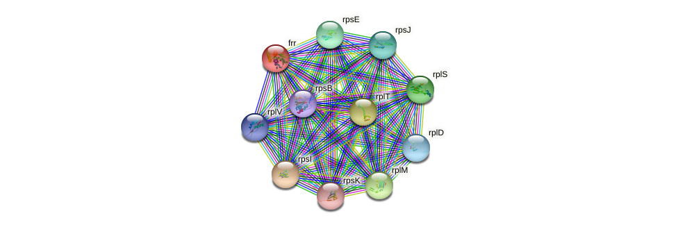 frr protein (Thermosynechococcus elongatus) - STRING interaction network