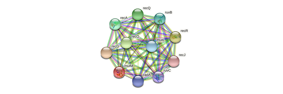 mutM protein (Thermosynechococcus elongatus) - STRING interaction network