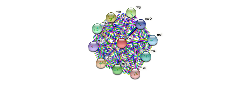 lepA protein (Thermosynechococcus elongatus) - STRING interaction network