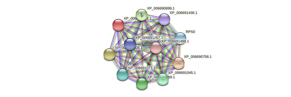 XP_006691073.1 protein (Chaetomium thermophilum) - STRING interaction network