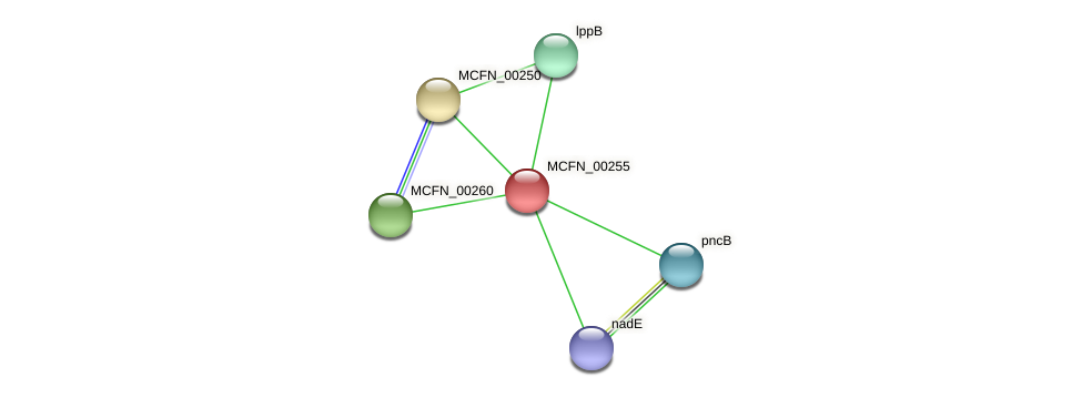 MCFN_00255 protein (Mycoplasma californicum) - STRING interaction network