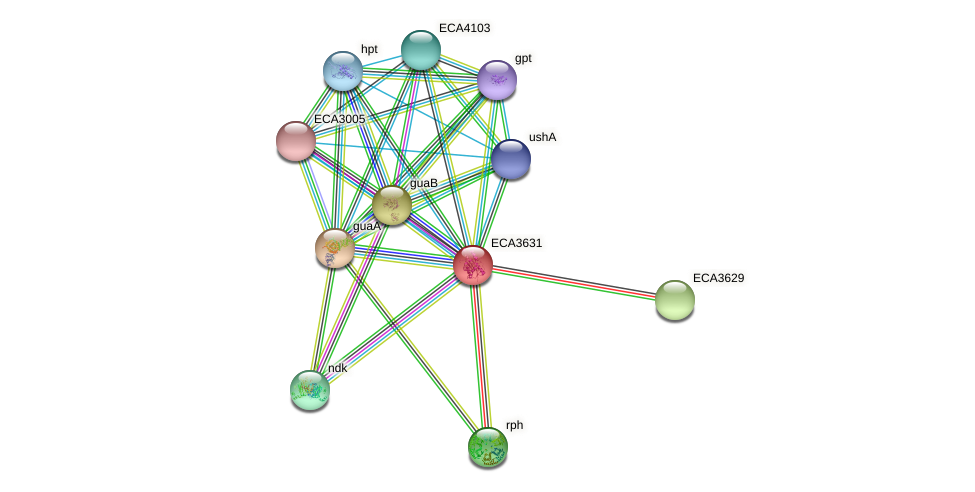 ECA3631 protein (Pectobacterium atrosepticum) - STRING interaction network