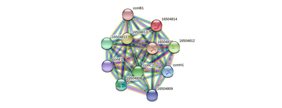 dsbE1 protein (Salmonella enterica CT18) - STRING interaction network