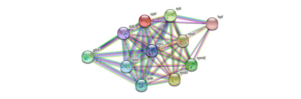 rplF protein (Lactobacillus plantarum) - STRING interaction network