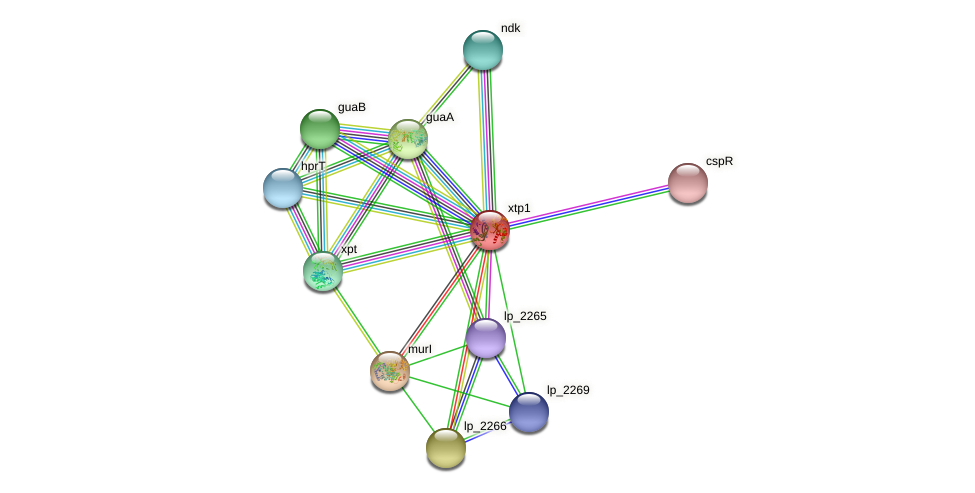 xtp1 protein (Lactobacillus plantarum) - STRING interaction network