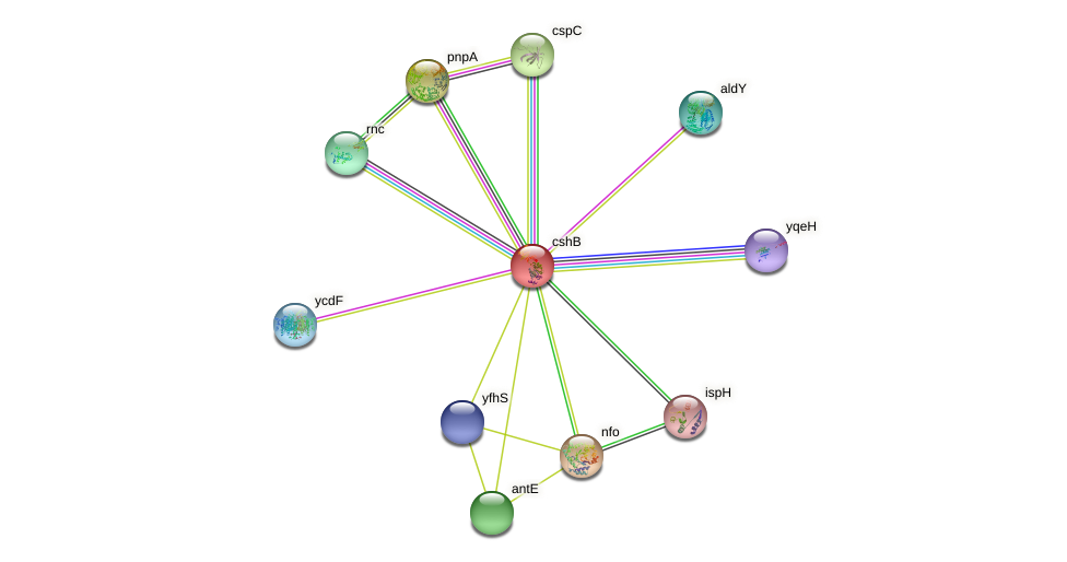 cshB protein (Bacillus subtilis) - STRING interaction network