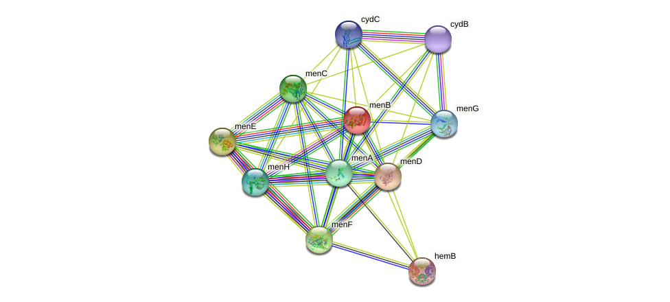 menB protein (Bacillus subtilis) - STRING interaction network
