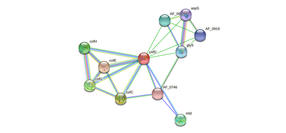 cofD protein (Archaeoglobus fulgidus) - STRING interaction network