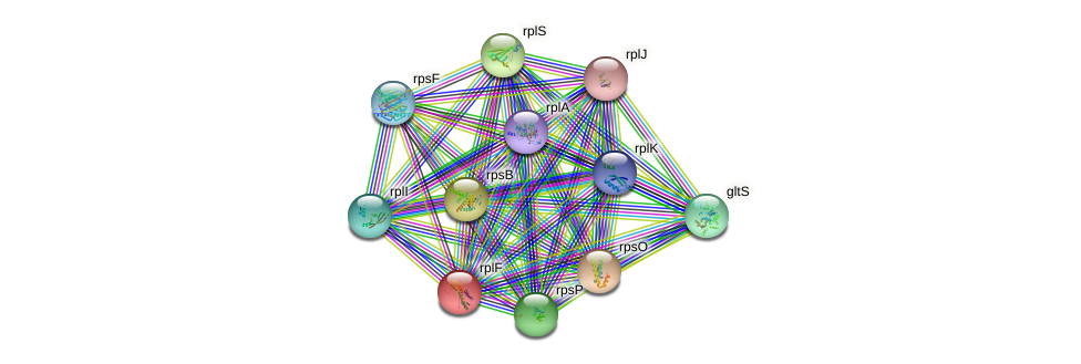 rplF protein (Streptomyces avermitilis) - STRING interaction network