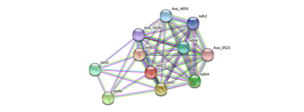 petC2 protein (Anabaena variabilis) - STRING interaction network