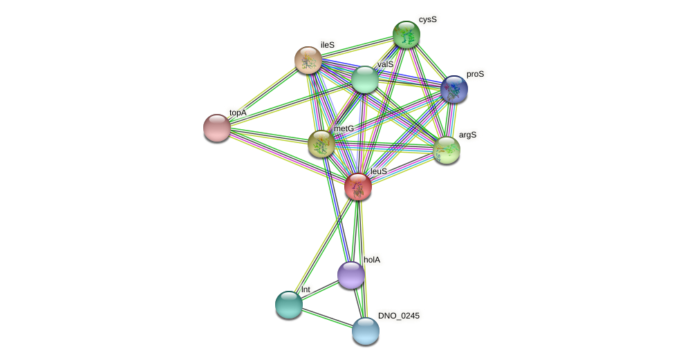 leuS protein (Dichelobacter nodosus) - STRING interaction network