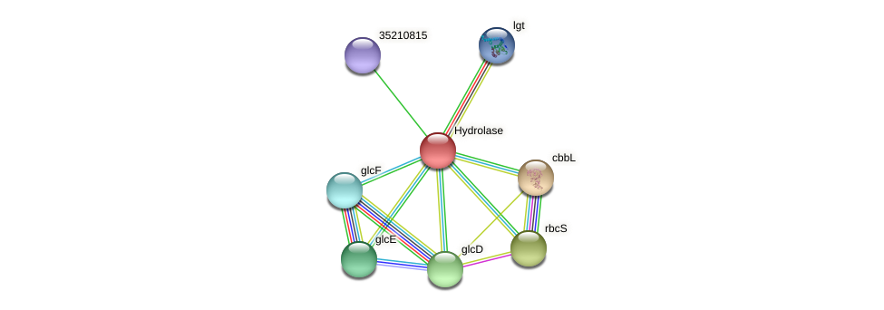 gll0254 protein (Gloeobacter violaceus) - STRING interaction network