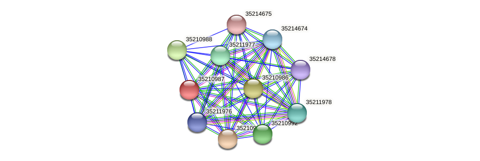 gll0426 protein (Gloeobacter violaceus) - STRING interaction network