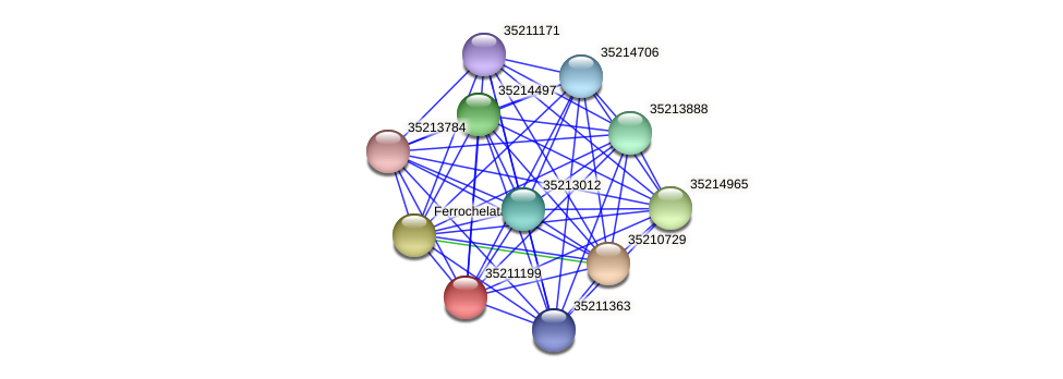 gll0637 protein (Gloeobacter violaceus) - STRING interaction network