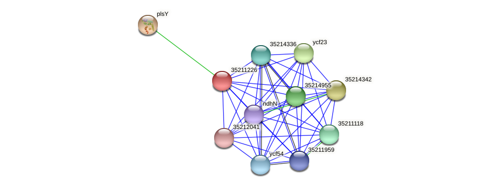 gll0664 protein (Gloeobacter violaceus) - STRING interaction network