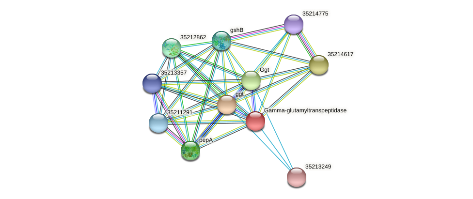gll0680 protein (Gloeobacter violaceus) - STRING interaction network