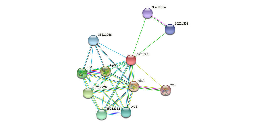 gll0771 protein (Gloeobacter violaceus) - STRING interaction network