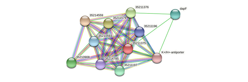 gll0813 protein (Gloeobacter violaceus) - STRING interaction network