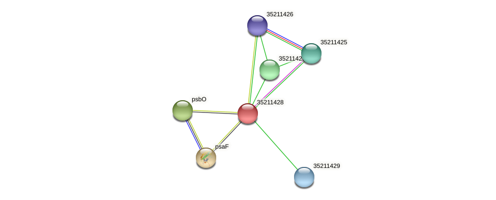 gll0865 protein (Gloeobacter violaceus) - STRING interaction network