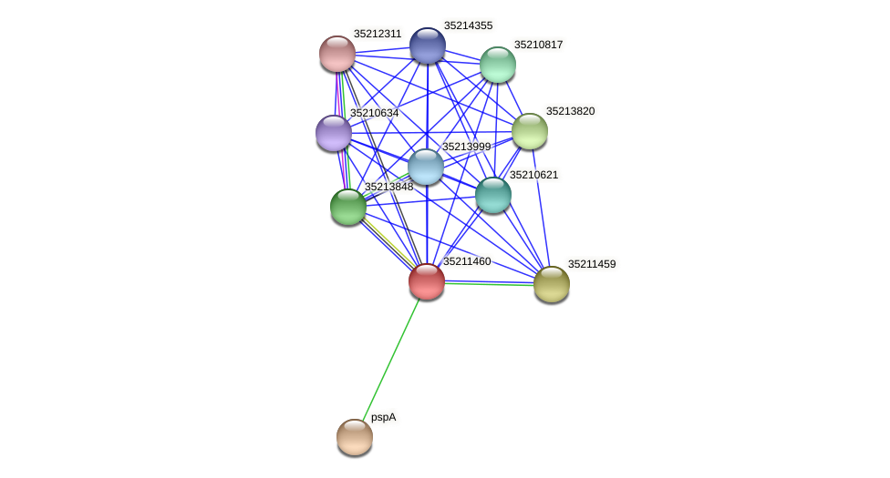 gll0897 protein (Gloeobacter violaceus) - STRING interaction network