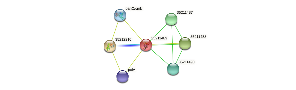gll0926 protein (Gloeobacter violaceus) - STRING interaction network