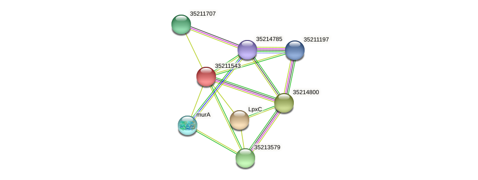 gll0980 protein (Gloeobacter violaceus) - STRING interaction network