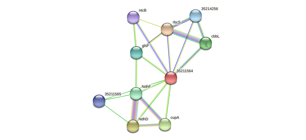 gll1001 protein (Gloeobacter violaceus) - STRING interaction network