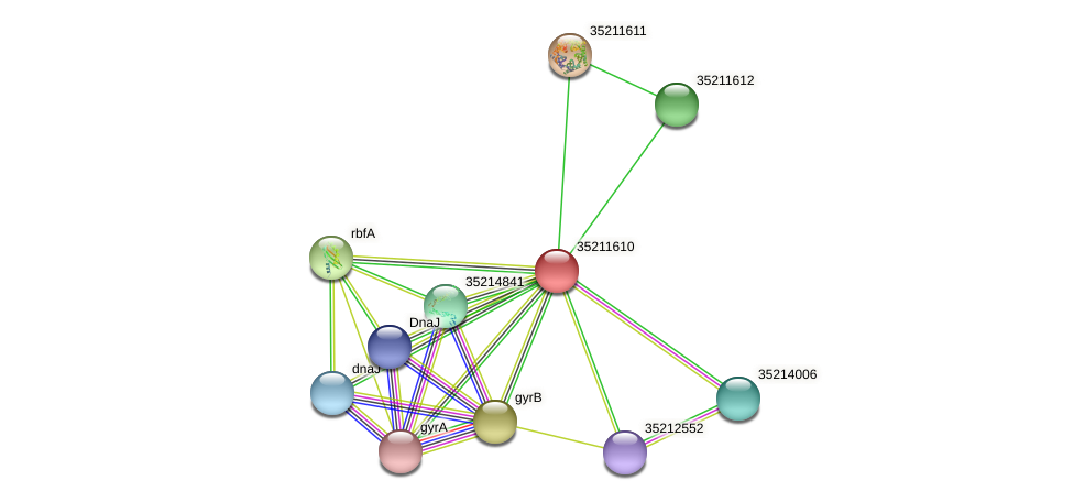 gll1047 protein (Gloeobacter violaceus) - STRING interaction network