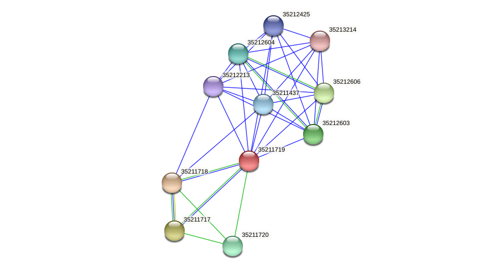 gll1155 protein (Gloeobacter violaceus) - STRING interaction network