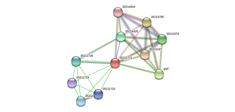 gll1157 protein (Gloeobacter violaceus) - STRING interaction network