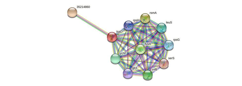tsaD protein (Gloeobacter violaceus) - STRING interaction network