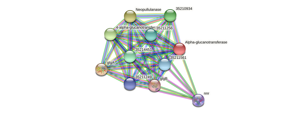 gll1431 protein (Gloeobacter violaceus) - STRING interaction network