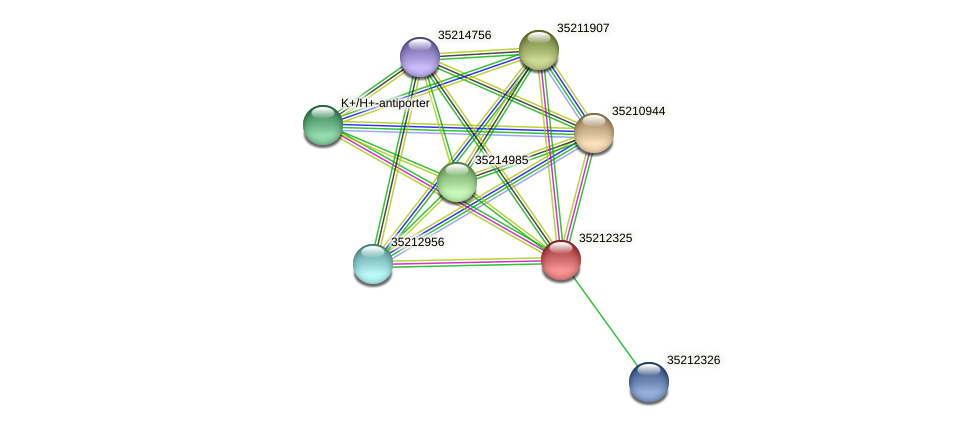gll1759 protein (Gloeobacter violaceus) - STRING interaction network