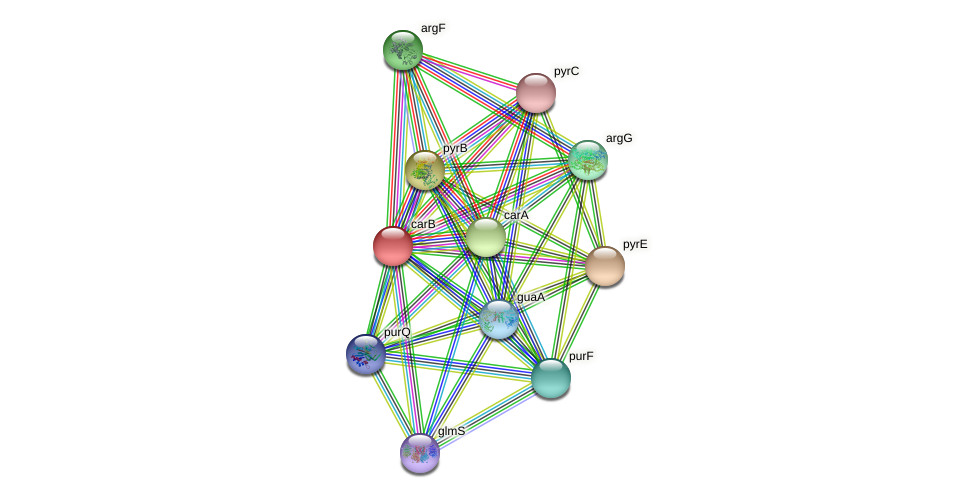 gll1769 protein (Gloeobacter violaceus) - STRING interaction network