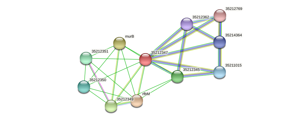 gll1781 protein (Gloeobacter violaceus) - STRING interaction network