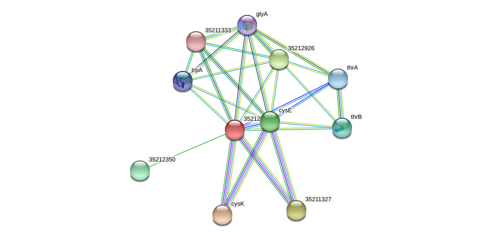 gll1785 protein (Gloeobacter violaceus) - STRING interaction network