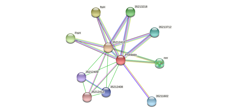 gll1845 protein (Gloeobacter violaceus) - STRING interaction network