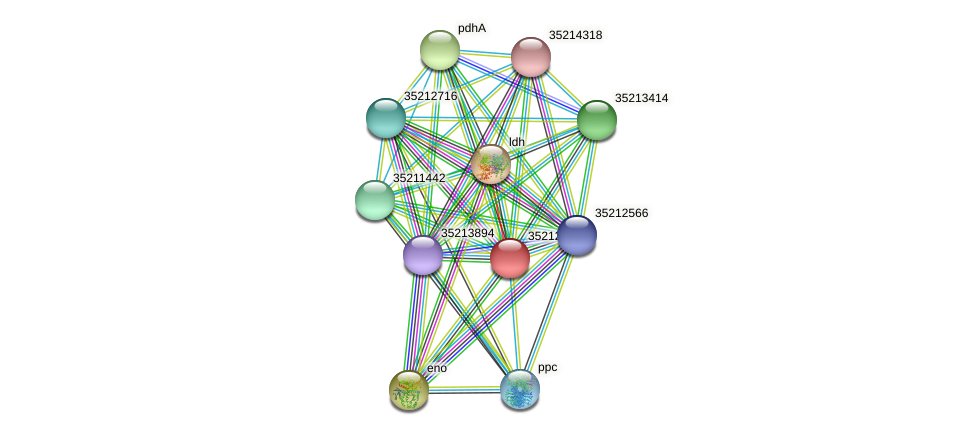 gll1985 protein (Gloeobacter violaceus) - STRING interaction network