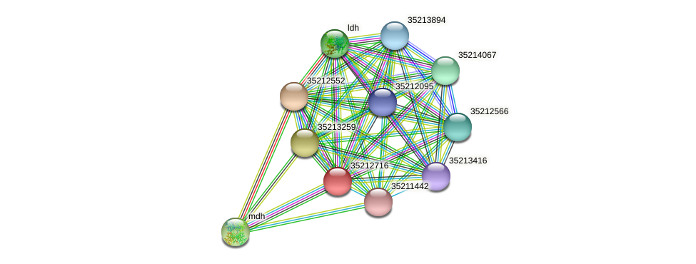 gll2149 protein (Gloeobacter violaceus) - STRING interaction network