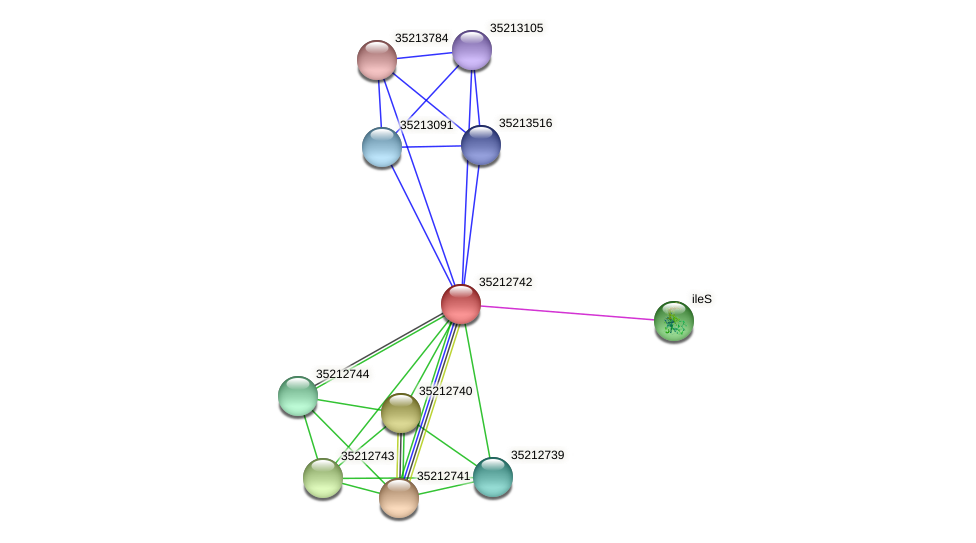 gll2175 protein (Gloeobacter violaceus) - STRING interaction network