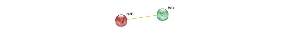 crcB protein (Gloeobacter violaceus) - STRING interaction network