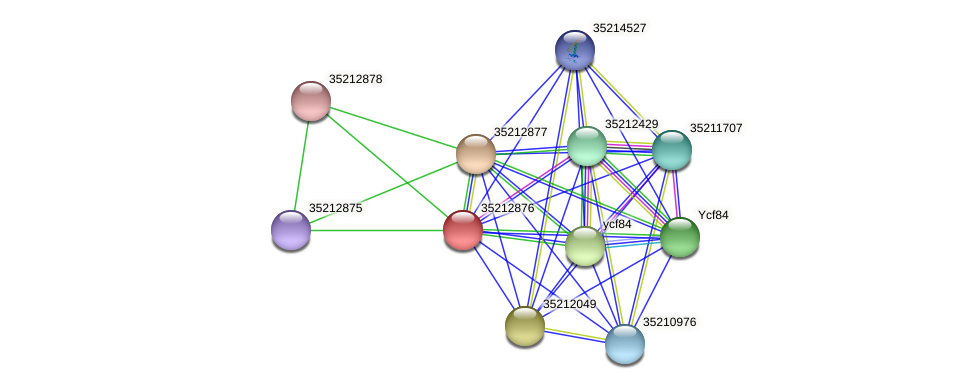 gll2308 protein (Gloeobacter violaceus) - STRING interaction network