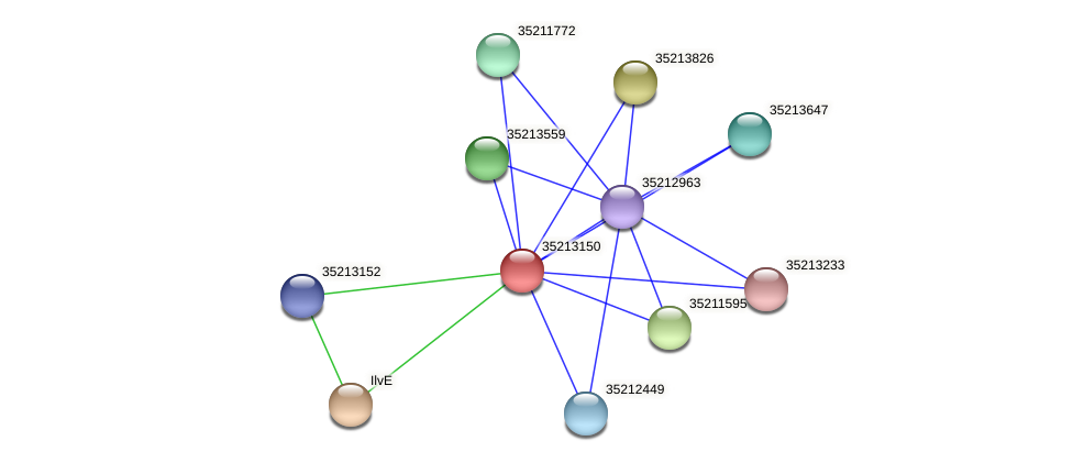 gll2581 protein (Gloeobacter violaceus) - STRING interaction network