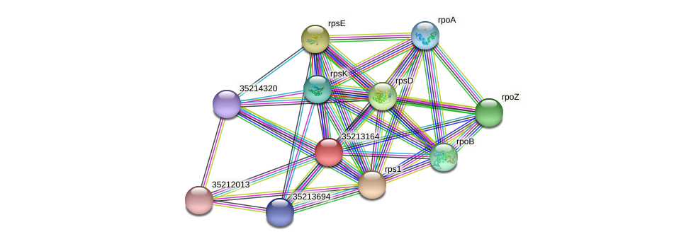 gll2595 protein (Gloeobacter violaceus) - STRING interaction network